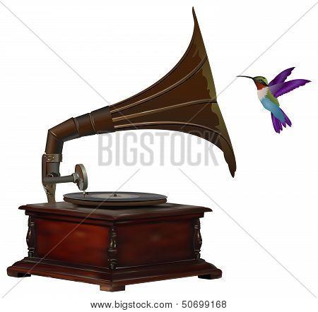 Gramophone And Hummingbird