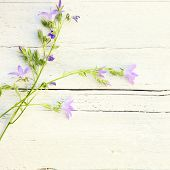 stock photo of dainty  - Delicate summer floral background with sprays of dainty little lilac coloured flowers lying on textured white painted wood with splits and cracks and copyspace for your text - JPG
