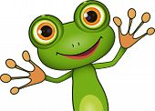 image of amphibious  - standing cute green frog with big eyes - JPG