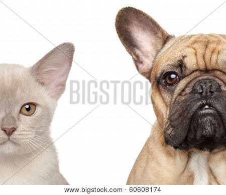 Cat And Dog, Half Of Muzzle Close-up Portrait