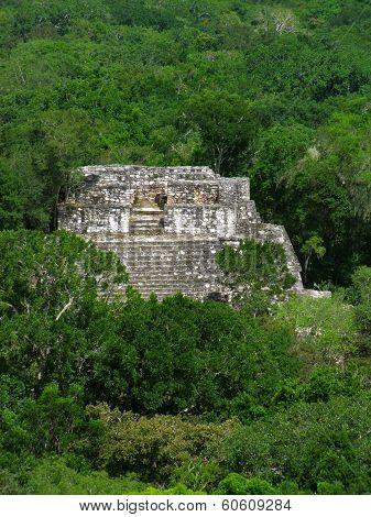 Temple At Calakmul