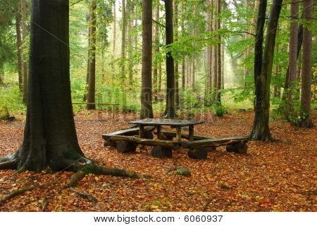 bench in forest