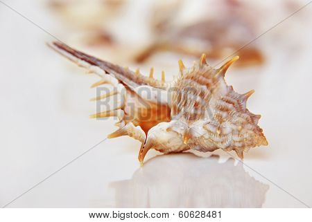 Sea shell, beautiful ocean life of Andaman, Thailand