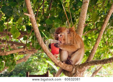 Monkey Eating Strawberry Shake On The Railay Beach.thailand
