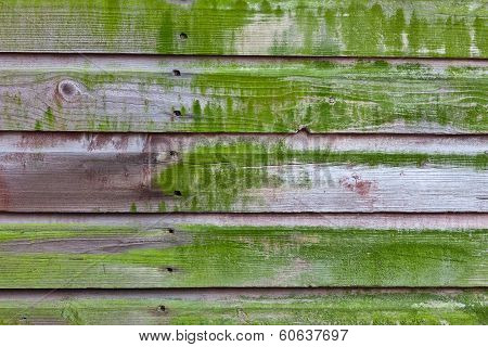 Horizontal Plank Wall With Green Mold