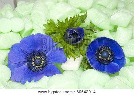Blue Anemones In Green Isolation Foam