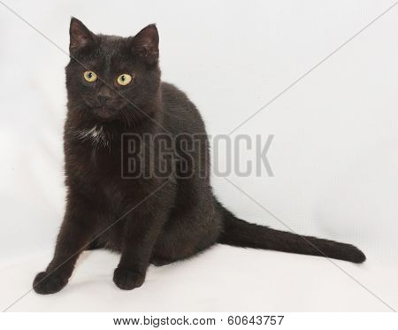 Black Cat With Yellow Eyes Sitting, Looking In Disbelief