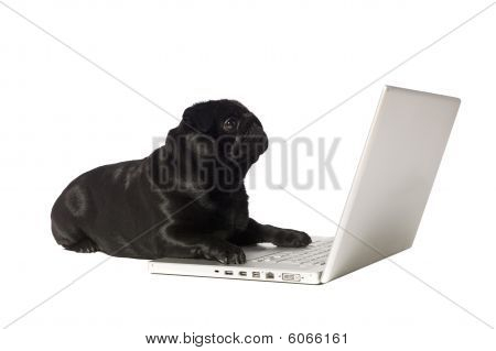 Black Dog At The Computer