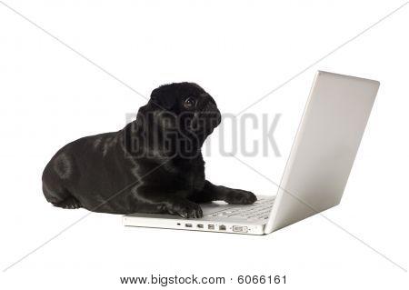 Black Dog At The Computer
