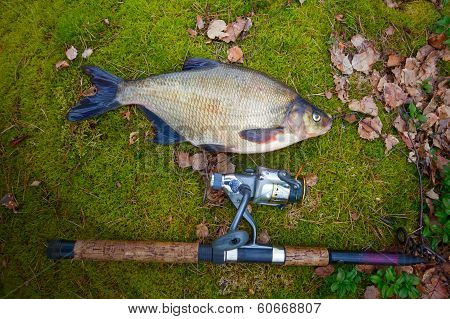 Bream From The Far Lake
