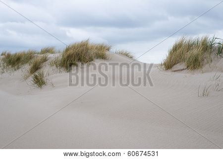 Sand Dunes With Beachgrass