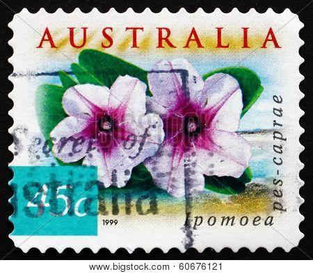 Postage Stamp Australia 1999 Beach Morning Glory, Plant