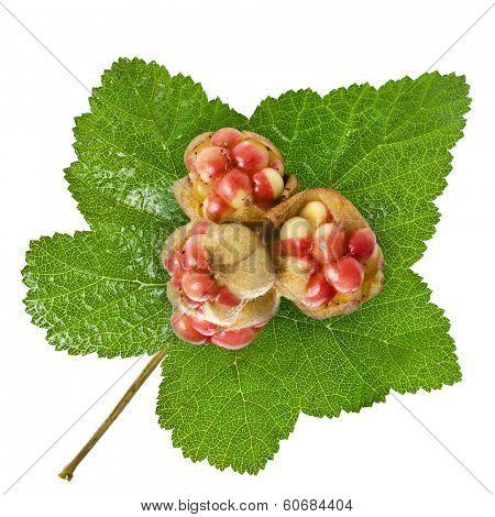 Fresh Cloudberry ( Rubus chamaemorus) close up isolated on white