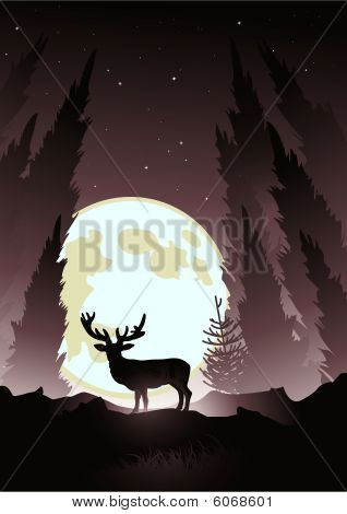 stag silhouetted by the moonlight