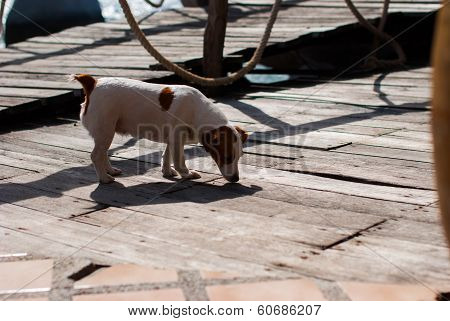 Dog Sniffing On The Ground