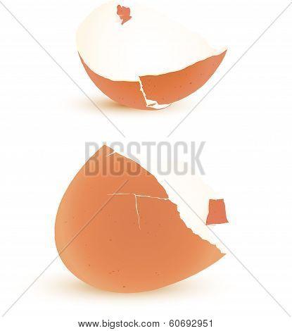 Eggshell Vector