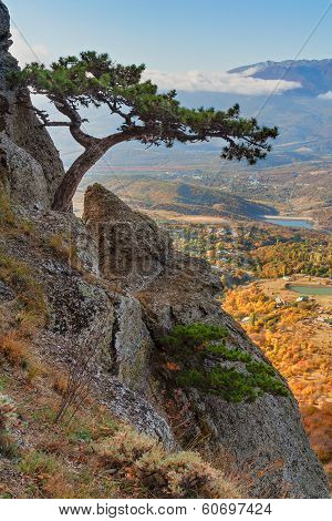 Mountain Pine On The Cliff And Autumn Valley As Background