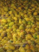 Mango-processing Factory