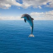 stock photo of dolphin  - single jumping dolphin - JPG