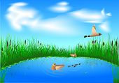 stock photo of bulrushes  - blue lake with grass and a family of ducks on blue sky background - JPG