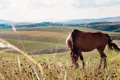 pic of horses eating  - beautiful brown horse grazing in a meadow - JPG