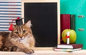 picture of bachelor party  - Scientific siberian cat with educational accessories concept - JPG