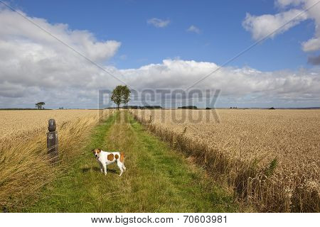 Long Distance Footpath In Summer