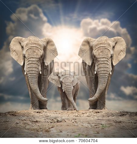 African elephant (Loxodonta africana) family on the road.