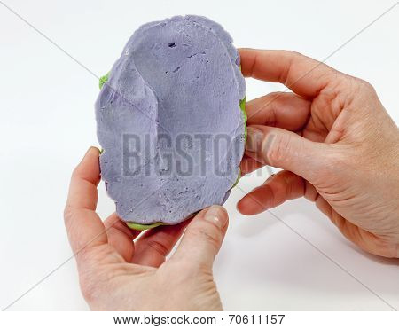 Artificial Human Ear In Negative Form Plaster