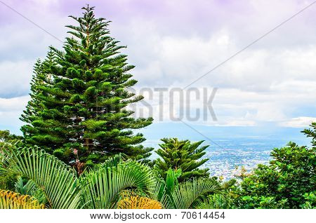 Fir Trees And Ferns Overlooking Ching Mai