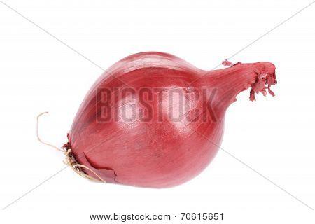 Ripe red onion.