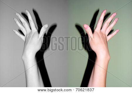 pair of the feminine hands