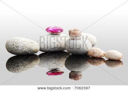 shell & stones