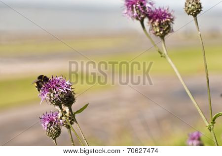 Bee and burdock