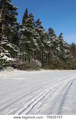Wintry landscape with snowy trees