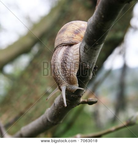 Snail on the bough