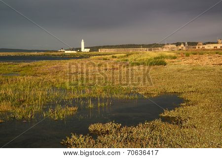 Landscape Of Wetlands Foliage During Stormy Sky Sunset Towards Lighthouse