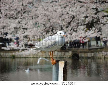 Standing seagull on a pole