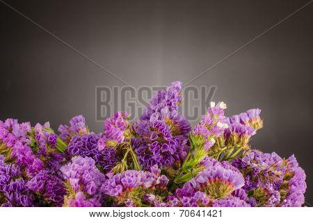 Violet Statice