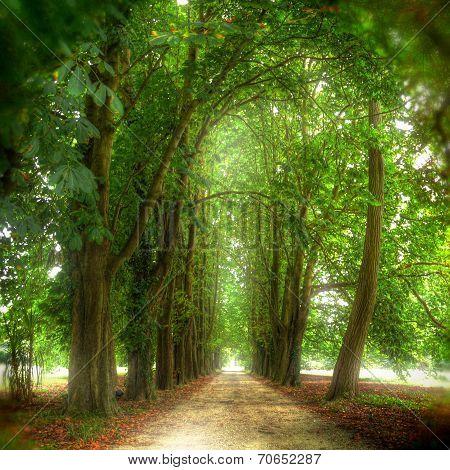 Footpath Among Trees