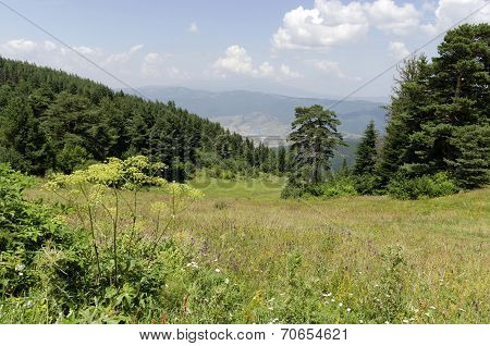 Green forest and high peaks
