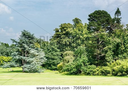 Trees in parkland