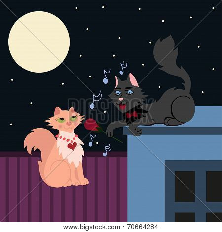 Night serenade, two loving cats, cat in love sings the serenade