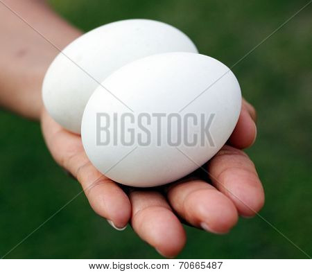 Two white eggs on a hand