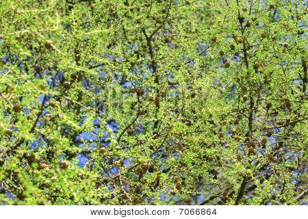 Tree At Spring