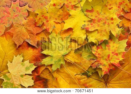 Red And Yellow Autumn Sheet