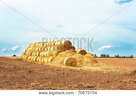 Many Straw Bales On Stubble Field After Harvesting. Harvest Time.