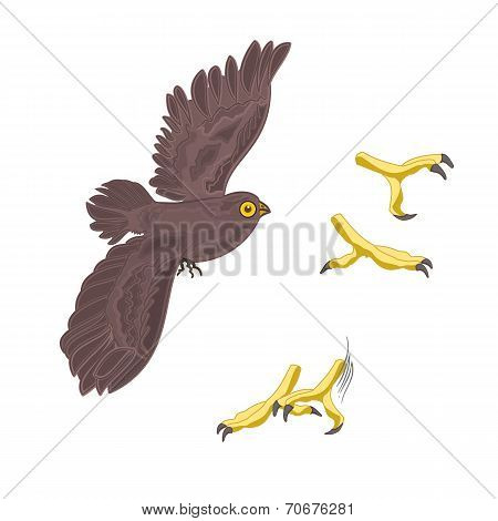 Halloween Owl And Talons Vector