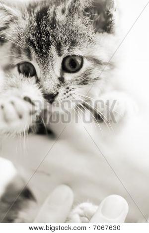 Kitten Being Held