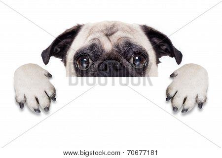 Placard Banner Dog